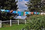 Amish Laundry on Line, Vernon County, Wisconsin