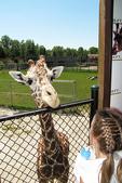 Feeding Giraffe, NEW Zoo, Suamico, Green Bay, Wisconsin