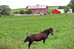 Amish Farm and Horse by Road, Columbia County, Wisconsin