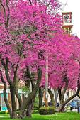 Redbud Tree Festival in Spring, Columbus, Wisconsin