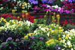 Spring Flower Show, Mitchell Park Domes, Milwaukee, Wisconsin