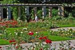 Rose Garden, Boerner Botanical Gardens, Milwaukee, Wisconsin