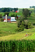 Amish Farmer Working Field, Driftless Area, Vernon County, Wisconsin
