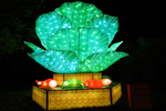 The Crystal-clear Cabbage Display at Night, China Lights, Boerner Botanical Gardens, Milwaukee, Wisconsin
