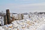 Ice Fence in Winter, Prairie du Chien, Wisconsin