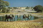 Elephant at Waterhole, Etosha National Park, Namibia, Africa