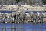 Zebra at Waterhole, Etosha National Park, Namibia, Africa