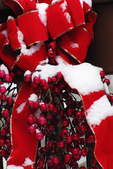 Bow & Berries In Winter, Appleton, Wisconsin