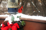 Cardinal In Snow At Feeder With Christmas Decorations, Appleton, Wisconsin