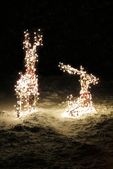 Lighted Reindeer in Yard at Christmas, Appleton, Wisconsin