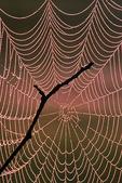 Spider Web and Branch, Appleton, Wisconsin