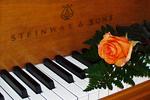 Salmon Rose On Piano, Appleton, Wisconsin