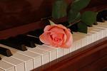 Rose on Piano Keys, Appleton, Wisconsin