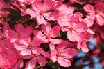 Spring Blossoms at Vulcan Heritage Park, Appleton, Wisconsin