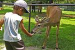 Feeding Deer at Wildwood Wildlife Park and Nature Center, Minocqua, Wisconsin