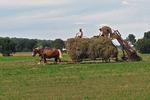Amish Farmers Gathering Hay, Markesan, Wisconsin
