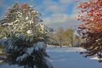 Snow in Late Fall in Backyard, Appleton, Wisconsin