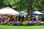 Flowers for Sale at Farmers Market, Sheboygan, Wisconsin