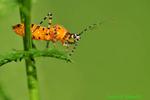 Assassin bug (DIN243)