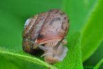 Snail (DSL5)