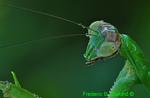 Praying mantis head (DIN197)