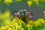 Locust borer face (DIN90)