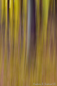 Trees in motion abstract (DFL602a)