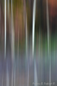 Trees in motion abstract 2 (DFL601b)