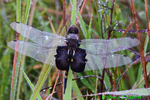 Black saddlebags with dew (DDF1146)