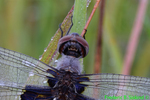Black saddlebags (DDF1146b)