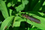 Stonefly (DIN1391)
