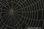 Spiderweb with dew (DDW36)