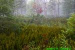National Forest scene (DSC11)