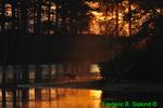 Sandhill cranes sunrise (DSC16)