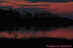 Common egret sunrise (DSC21)