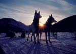 Lead dogs silhouetted by setting sun during winter camping trip.