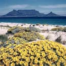 Springtime view to Table Mountain-and Cape Town- from across Table Bay.