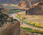 Canyon de Chelly, autumn afternoon, with cottonwood trees. Canyon de Chelly National Monument, Arizona.