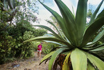 Hiker exploring the Yawzi Point Trail with large agave plants and cactus.  Southeast coast of St. John Island.  U.S. Virgin Islands National Park, Caribbean.