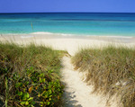 Path to Atlantic side of beach on Stocking Island. Near George Town and Great Exuma Island, Exuma Cays, Bahamas.