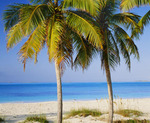Palms and beach at Tar Bay, Exuma Sound. Great Exuma Island, Exuma Cays, Bahamas.