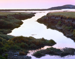 Freshwater Marsh at dawn.  Santa Rosa Island.  Channel Islands National Park, California