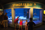 Visitors watching the live stingray display at the Mystic Aquarium.  Mystic, Connecticut.