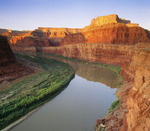 The Colorado River [with saltbush], sunrise.  Canyonlands National Park, Utah.