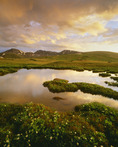 Sunset storm on the continental divide, near Independence Pass, with ponds and marsh marigolds.  Rocky Mountains.  San Isabel National Forest, Colorado.