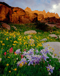 Columbine, Indian paintbrush and heartleaf arnica beneath Mt. Toll, near Boulder and Denver, Indian Peaks Wilderness, Colorado