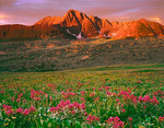 Indian paintbrush and Maroon Peak from Fravert Basin, Maroon Bells-Snowmass Wilderness, Colorado