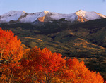 Rare red aspen at sunset and East Beckwith, Kebler Pass area, near Crested Butte, Colorado
