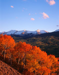 Rare red aspen and East Beckwith at sunset, Kebler Pass area, Gunnison National Forest, Crested Butte, Colorado