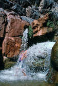 Cora Randall cooling off in Clear Creek, mile 84, Grand Canyon National Park, Arizona